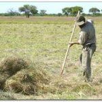 Resolución 71/2009-CNTA. Salarios. Trabajo Agrario. Remuneraciones. Topes. Suba