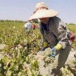 UATRE: Nueva escala salarial para los trabajadores agrarios