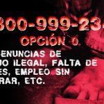 0800 de la AFIP para denunciar trabajo ilegal de manera anónima