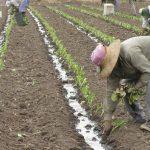 Determinación del salario del peón rural